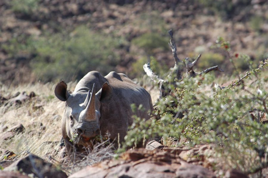 The legalisation of rhino horn trading