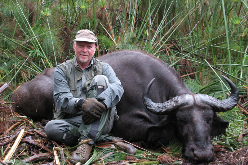 A genuine Nile buffalo shot in Ethiopia's Dati Swamps. The drop in the horns never descends below a line drawn through the eye sockets of a genuine Nile buffalo.