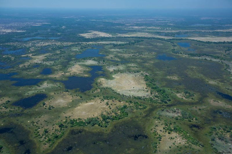 The Okavango swamps seen from the air