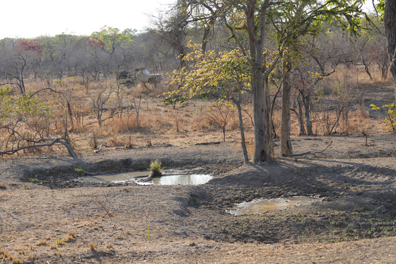 The fast drying waterhole where my guide, Ryan Cliffe, first spotted and filmed the herd of Livingstone's eland housing the massive old warlord described in the story.