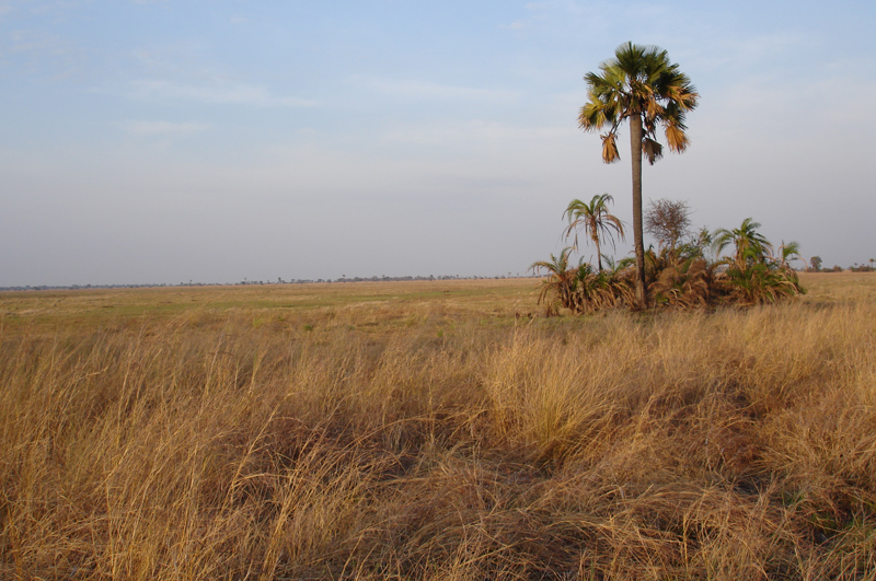 The dry mbuga where we hunted the side-striped jackal.