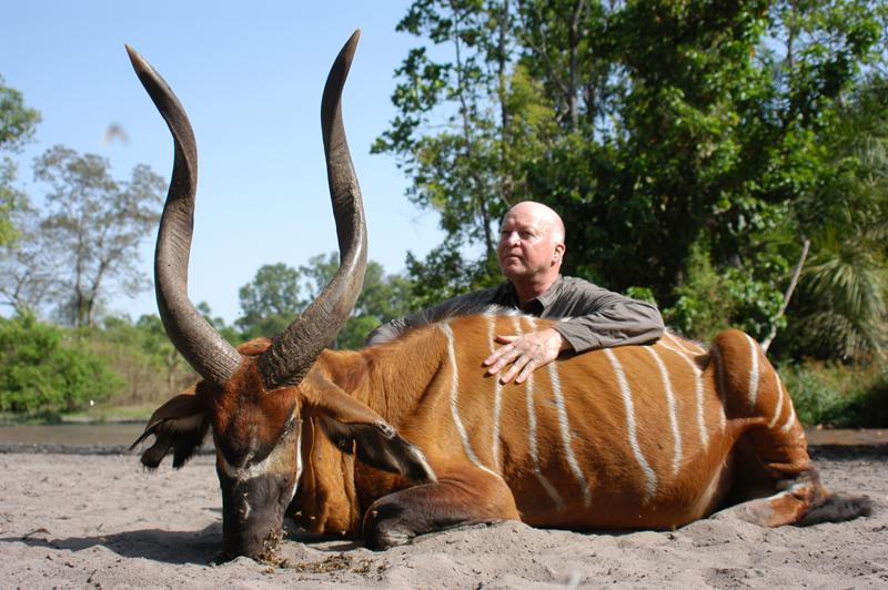 The ancient bongo I shot at the Batou salt lick in north central C.A.R. It currently ranks as number 1 in Rowland Wards Record of Big Game.