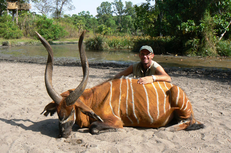 The huge old bongo bull (ranked number one in Rowland Ward's Records of Big Game), shot by the author from the same machan (in the background), from which he shot the giant forest hog in the story, seen here with Christophe Morio, the author's professional hunter.