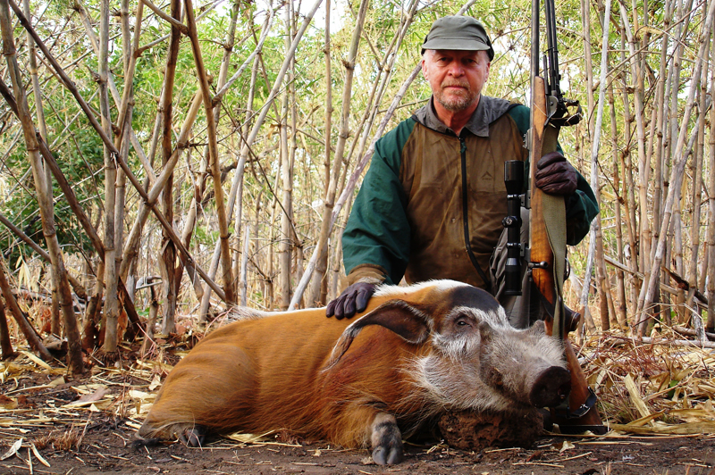 The last morning of a long safari. Both my .375 and I looking a little the worse for wear and, although I might not look it, very happy that, at last, I have found a good red river hog.