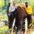 Rain Forest Elephant Hunting In Cameroon