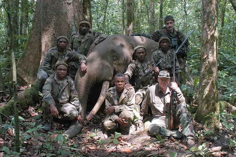 Geoffroy de Gentile and his pygmy tracking team with the author's rain forest elephant - a genuine Kamba Loxodonta cyclotis, as opposed to Loxodonta africanus, the African savannah elephant.