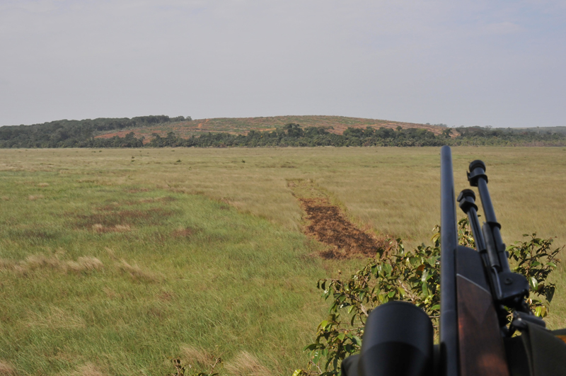 The view down one of the shooting lanes cut into the swamp with my .300 Win. Mag. leaning on the railing of the machan.