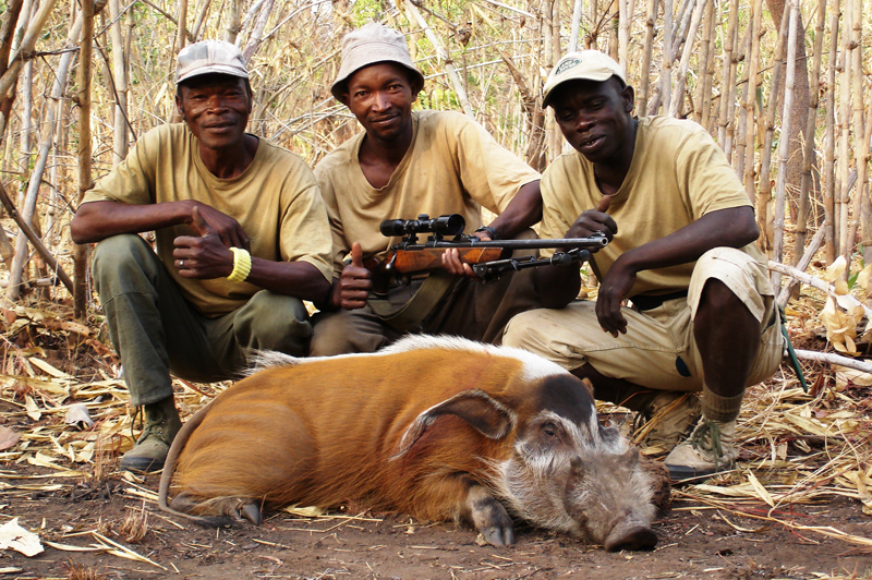 Luc, Assan and Deme pose with my.375 and a good red river hog shot on the last morning of my hunt.