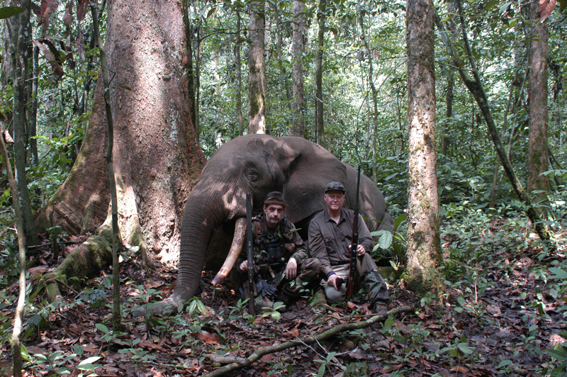 PHF with his .416 Rigby and Geoffroy de Gentile with his .500 Krieghof double sitting next to a good rain forest elephant in Cameroon.