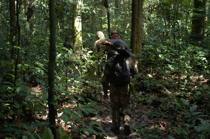 Mombato, my pygmy gun bearer, carrying my .416 Rigby in the Cameroon rain forest on an elephant hunt. It must have just finished raining as the water proof scope cover is still on.