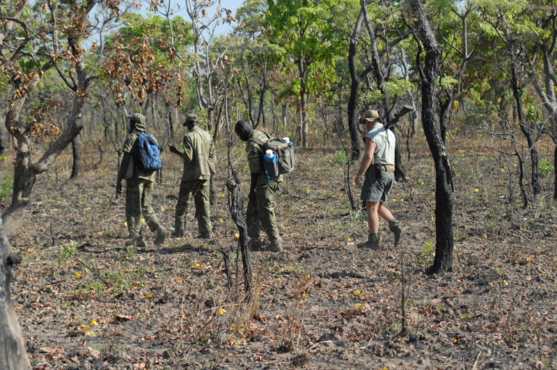 From left to right, Jeremy, the second tracker (giving Amadou a rest and doing the main tracking), Amadou, our baggage man, Yaya and Mike Curry, my PH, following the tracks of a herd a giant eland in Cameroon.