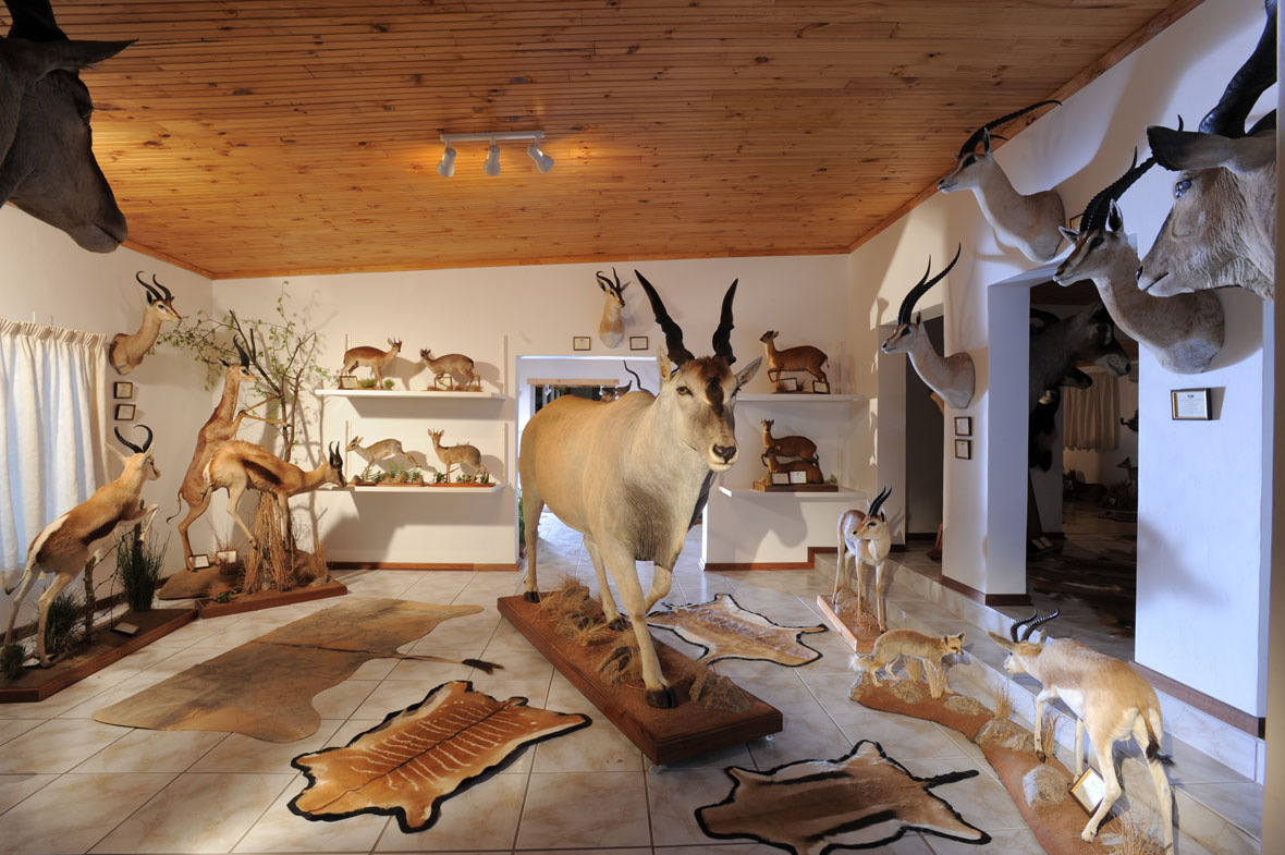 ELAND EAST: This room contains all the different eland and gazelle subspecies currently available on licence.