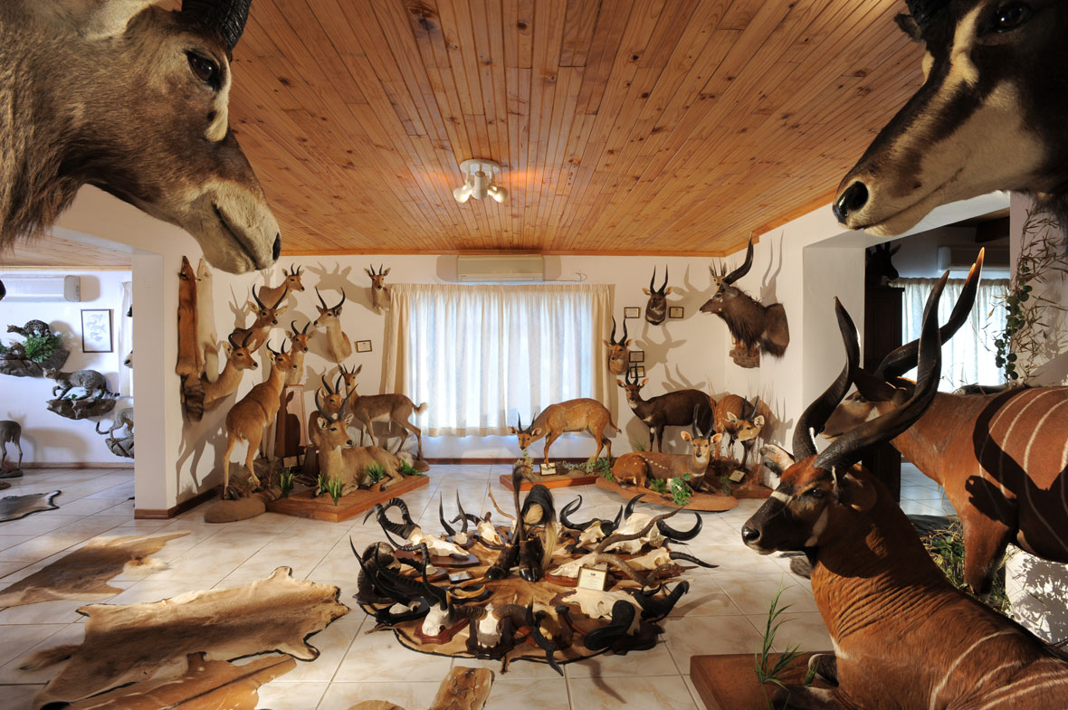Trophy room peter flack hunter writer conservationist for Trophy room design
