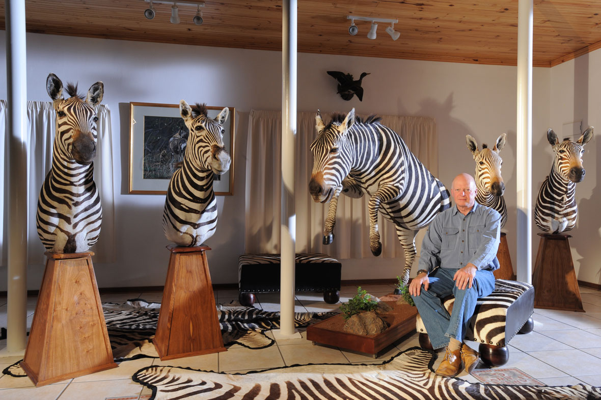 ZEBRA: Posing with different zebra subspecies. From left to right – East African and South African plains zebras and then Cape, cape and Hartman's mountain zebras.