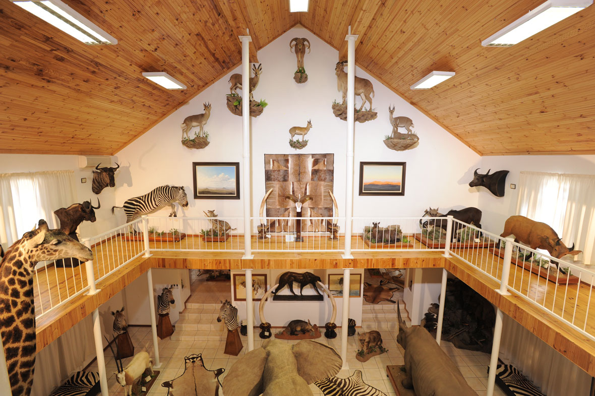 MAIN HALL UPSTAIRS WEST: The view of the largest of my eight trophy rooms seen from the upper level. Ahead on the wall are all the mountain game found in Africa – mountain reedbuck, Nubian ibex, Barbary sheep, klipspringer and vaal or grey rhebok.