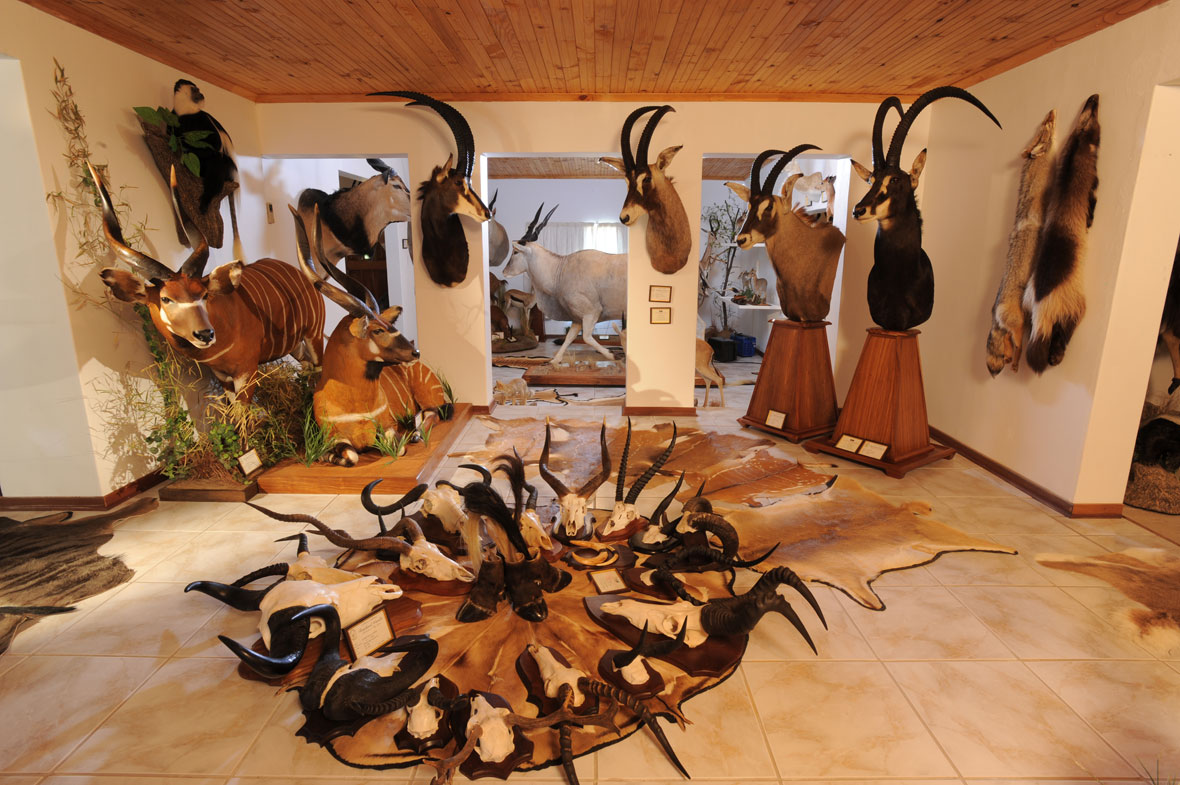 Deer Trophy Room Ideas