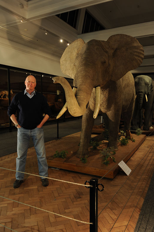 Peter standing next to a full mount forest elephant, which is a little over half the size of an equivalent savannah elephant. This one was shot in the Cameroonian rainforests and the pygmies who tracked it said it was the one that had killed their leader the week before.