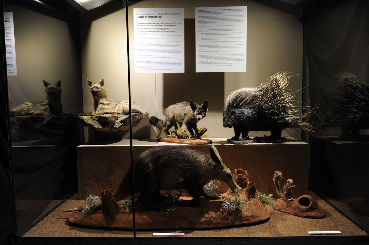 The exhibit is entitled, 'Living Underground' and consists of, from left to right: aardwolf, bat-eared fox, aardvark, porcupine and ground squirrel.