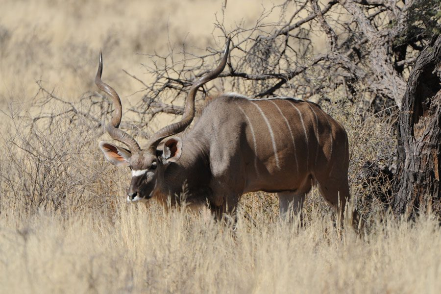 South African Hunting Statistics for 2015 – Some Observations