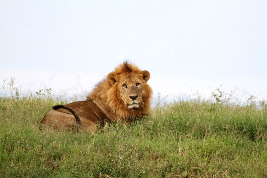 blog-south-african-hunting-statistics-2015-2
